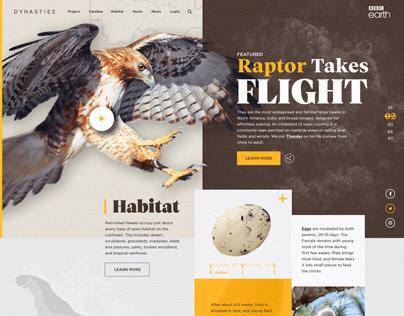 BBC Earth: Hawk