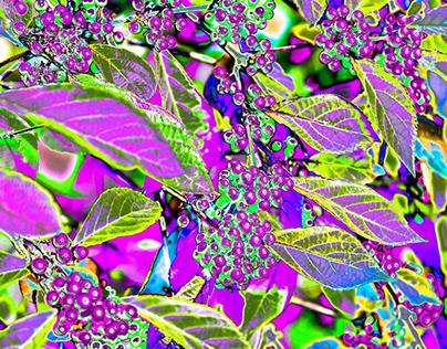 pop art plants