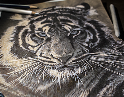 Pencil & Pen drawing of a Tiger - by Julio Lucas