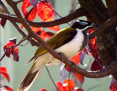 Interesting Beautiful Birds