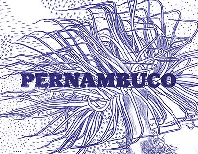 suplemento pernambuco n. 165