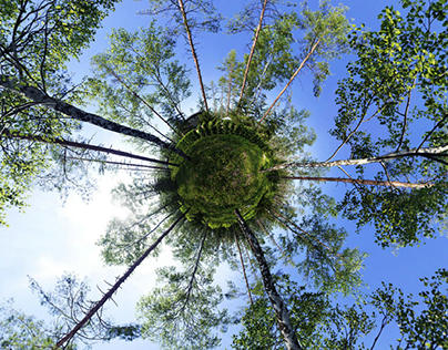 Spherical forest panorama