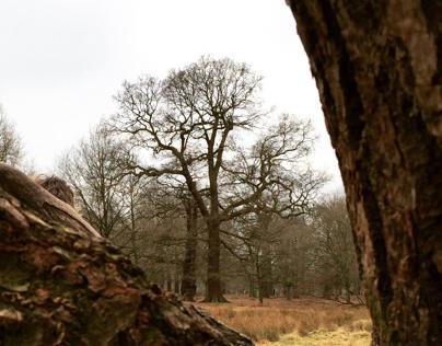Dunham Massey Forest