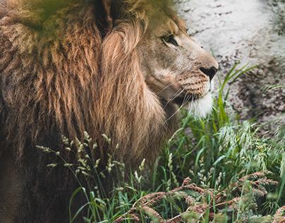 Seneca Park Zoo - 2019