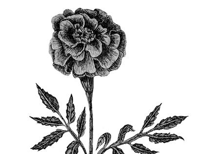Flowers- ink series
