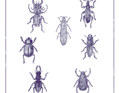 Beetles Vintage Collection Duotone on White background