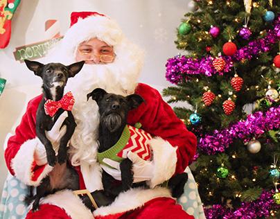 Dogtopia Christmas Photos 2016-2019
