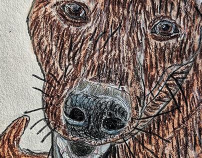 Drawcember day 1: Jasper the Dutch Shepherd OC