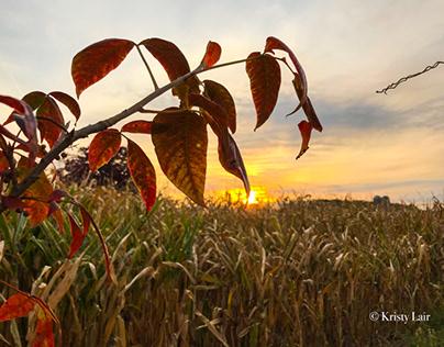 Fall sunrise 10/11/20