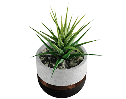 modeling a PBR succulent collection