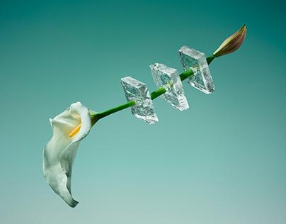 Freezing Flowers