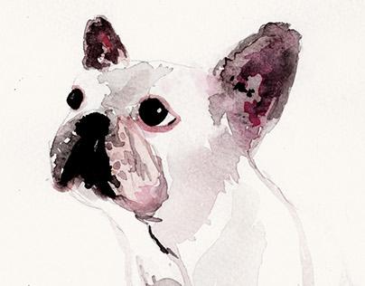 Animal - Frenchie , Cat , Bunny , Pug