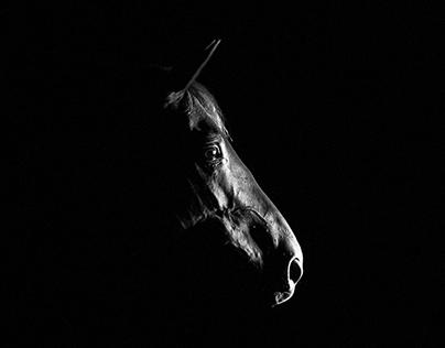Horses Expressions