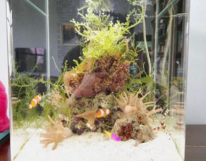 Рифовый аквариум на 30 литров