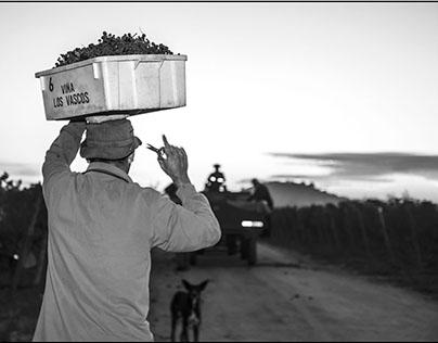 Vendimia en Colchagua -Viña Los Vascos - DBR Lafite