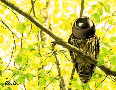 Secure-A-Owl - Concept