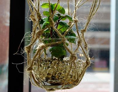 Plant Collaboration