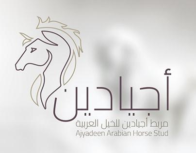 Ajyadeen | Horse Stud