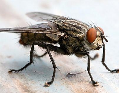 Mơ thấy con ruồi là điềm báo may hay rủi?