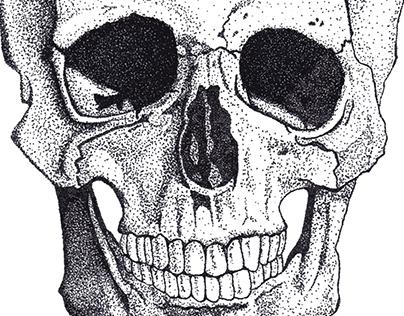 Calavera / Skull