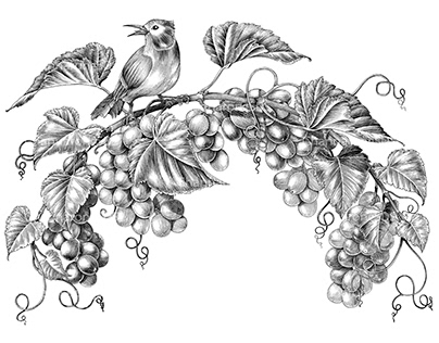 Grapes twig with little bird