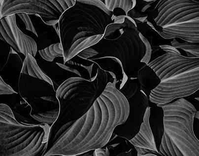 Organic black n`white