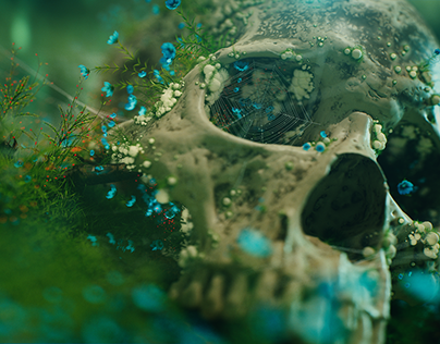 Skull in the forest
