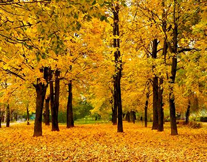 Golden park