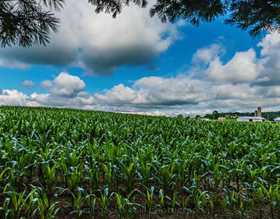 Clouds 'n Corn