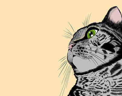 El gato Tilín