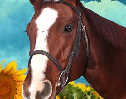 Lacy - Quarter Horse