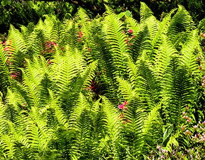 VanDusen Botanical Garden - I