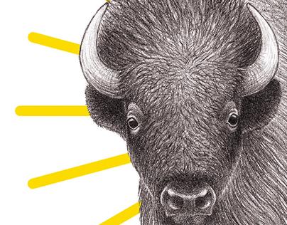 Bison, Hummingbird & Lynx Medicine