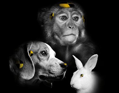 Deutscher Tierschutzbund – Tierversuche