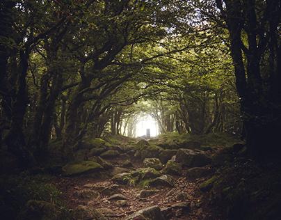 Sombre forêt