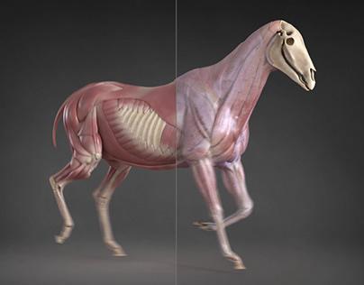 Horse with Ziva