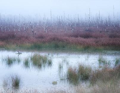 Fog Moor