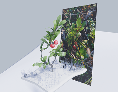 Kinnikinnick - Plant Encounters