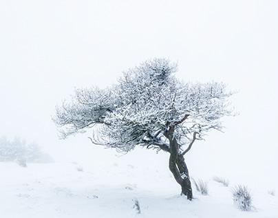 Hilltop Winter Woods