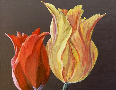 portrait of two tulips