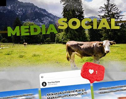 Social Media Cow / Sosyal Medya