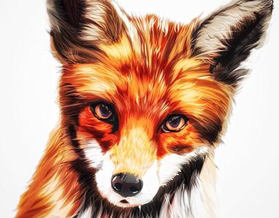 Illustration: Fox /fɒks/ 🦊 Canidae Vulpes Vulpes