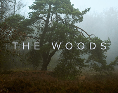 The Woods - an Autumn impression
