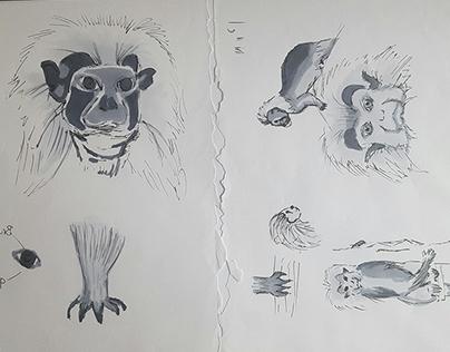 Sketches analoge portfolio