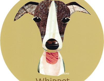 011 | Whippet