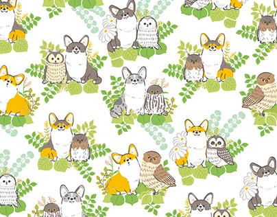 Corgis and owls