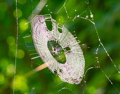 Webs of Hudson