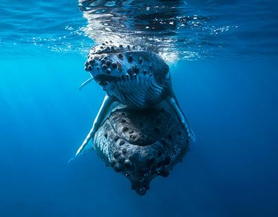 Humpback whale! www.underwater-landscape.com
