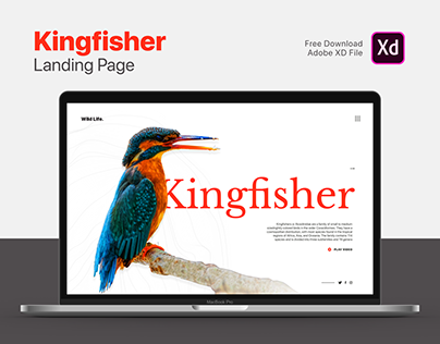 Kingfisher Landing Page   Free Download   Adobe XD