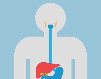 Bob's digestive system - Poster and website